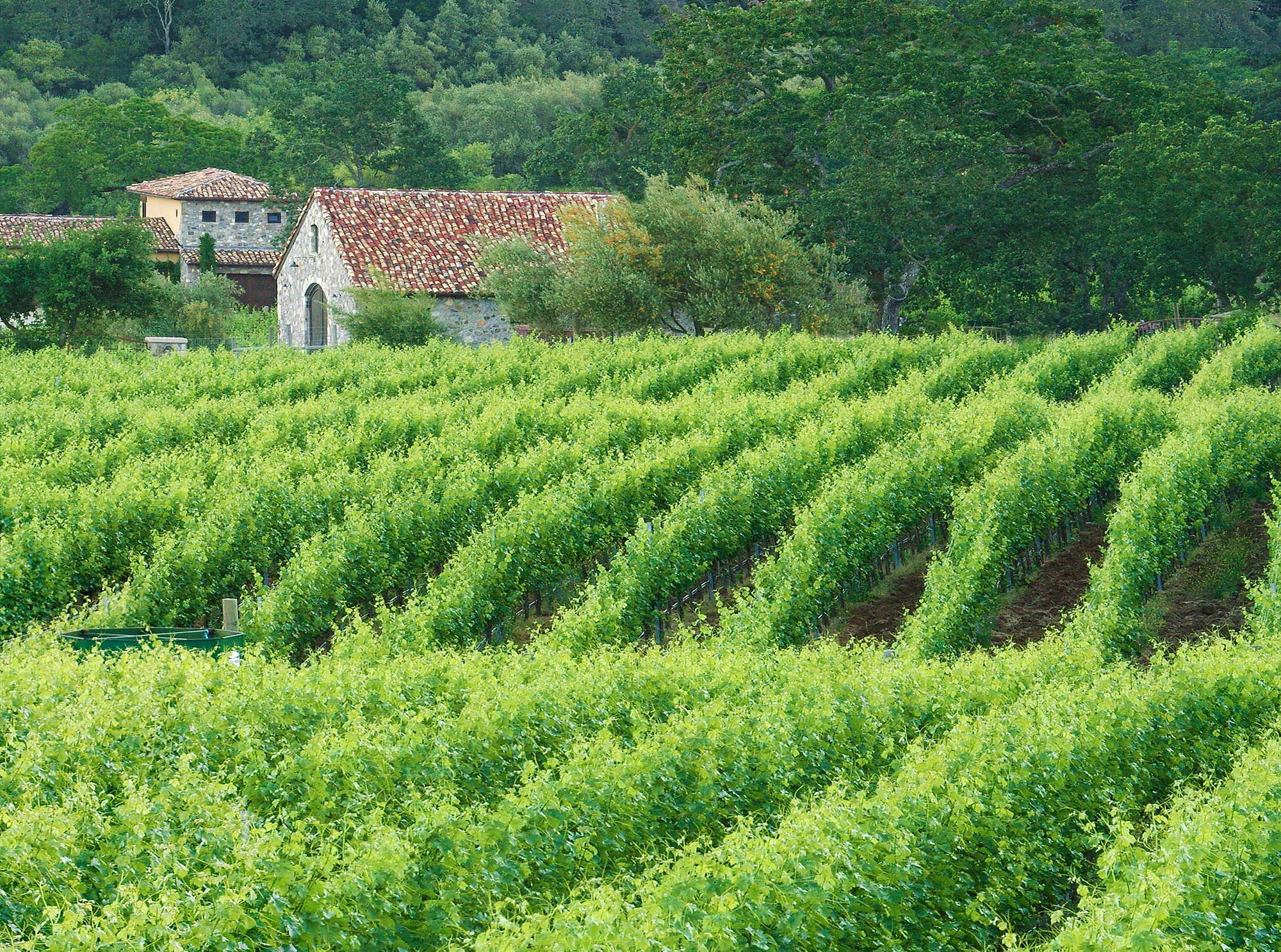 vineyards1